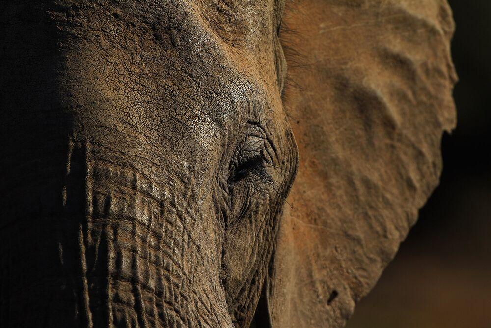 Botswana Elephants Win a Reprieve as Virus Keeps Hunters at Home