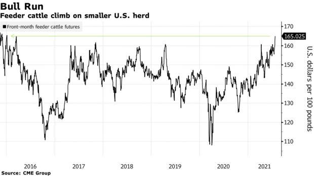 Feeder cattle climb on smaller U.S. herd
