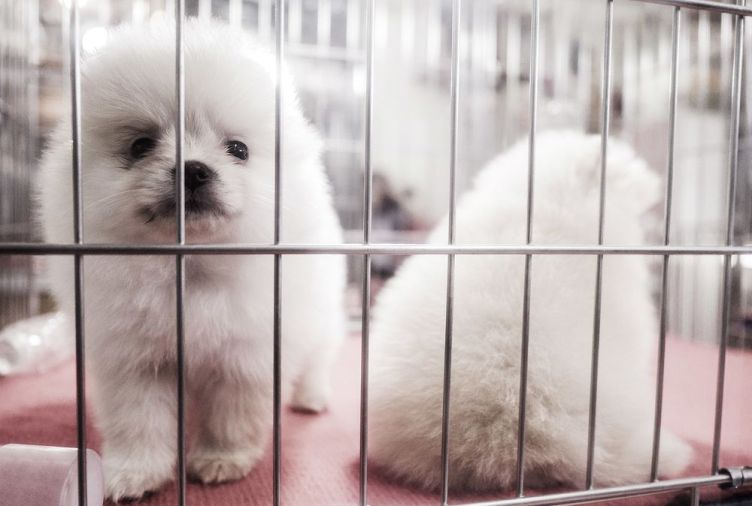 UK Bans Pet Shops From Selling Puppies And Kittens - Bloomberg
