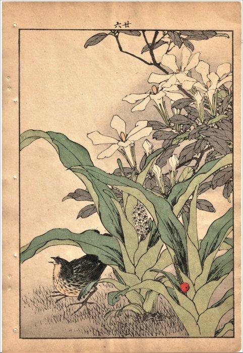 "Original woodblock print - Imao Keinen (1845-1924) - Japanse Gors, Kaapse Jasmijn en Rohdea Japonica - uit de serie ""Keinen Kacho Gafu"" - 1891 - Japan - Catawiki"