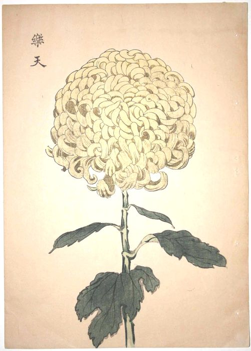 "Original woodblock print - Keika Hasegawa (act. 1893-1905) - From the series ""One Hundred Chrysanthemums by Keika"" - Japan - 1893"