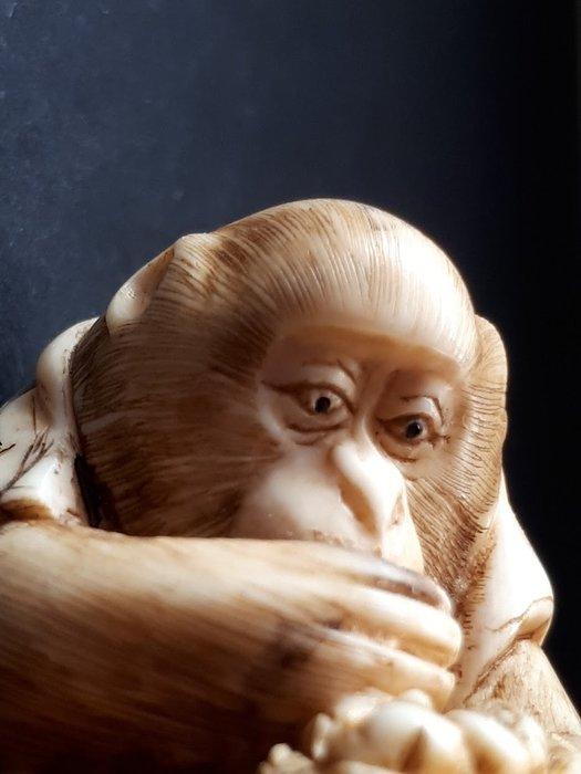 Netsuke monkey (1) - Ivory - Ape/monkey - Japan - Meiji period (1868-1912)