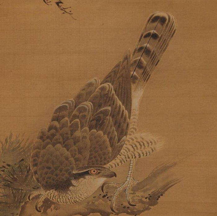 Hanging scroll, Painting - Silk - Hawk - with Signature 'Shogensai 昌玄斎' - Japan - Late Edo period
