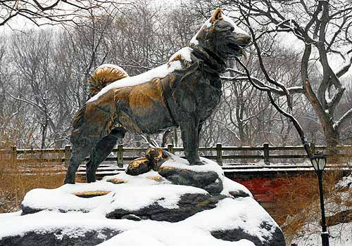 Image result for balto photo