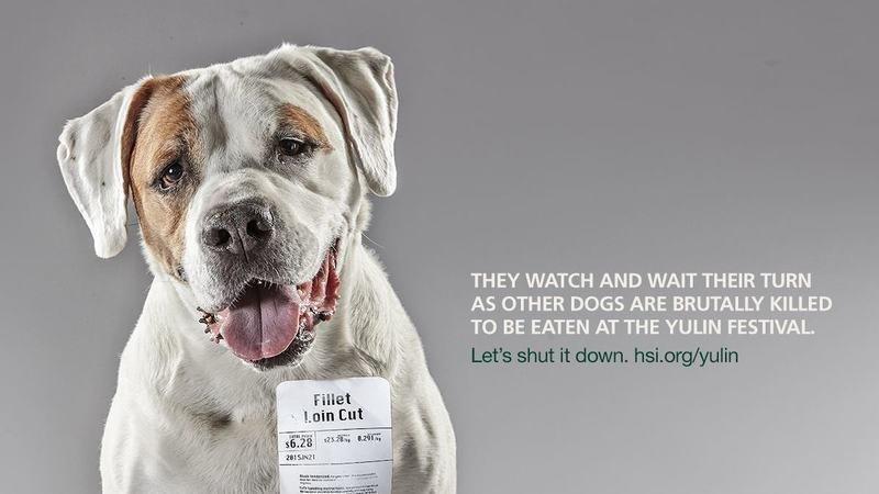 Image result for stop yulin dog meat festival