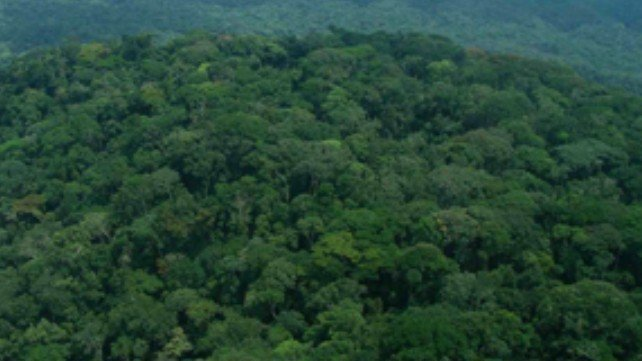 (1958) which was one of the very earl Petition Congo Rainforest Change Org