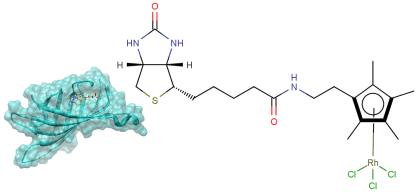 ビオチンで固定され塩化物イオンが外れた部分でもタンパク質アミノ酸側鎖と相互作用