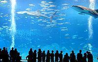200px-Okinawa_Churaumi_Aquarium
