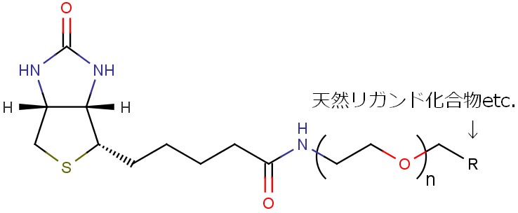 GREENbiotin2