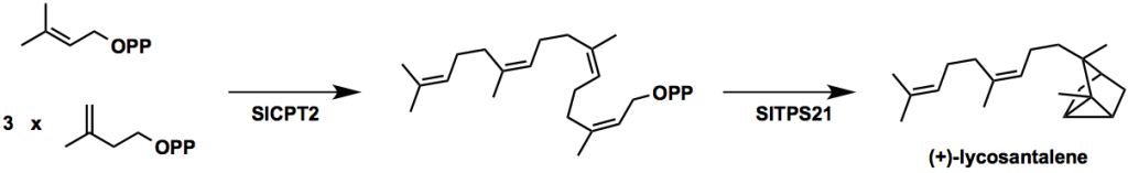 Lycosantalonol-scheme1