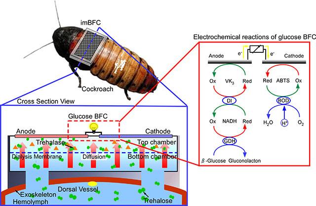 cockroach-battery