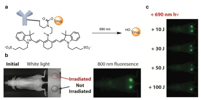 図3. aシアニン色素への近赤外光照射によるADCの分解. b(左)赤丸は590 nmの光を照射した部位. 黒丸は光を照射しない部位. (右)腫瘍へのADC局在化を示した近赤外光イメージング. c 光照射後の近赤外光イメージング. 光照射した腫瘍のみ, シアニン色素が照射量依存的に多く分解している.