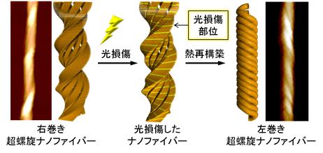 図1:光損傷および熱再構築(加熱・冷却処理)による螺旋の巻方向の変化