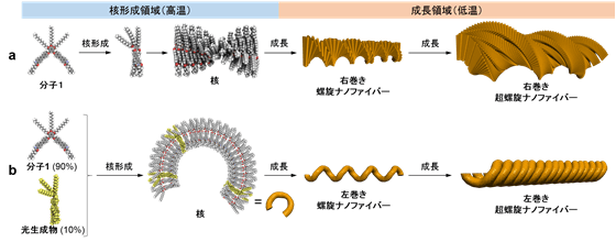 図2:超螺旋ナノファイバーの異なる集合プロセス. a:分子1の集合プロセス, b:分子1と光生成物の共集合プロセス.