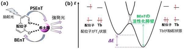 図1 (a)希土類錯体の発光、(b)エネルギー移動前後のポテンシャルエネルギー曲面(Tbの電子状態は簡略化)