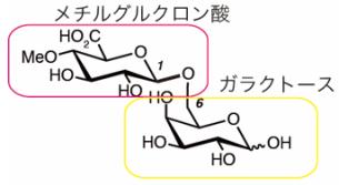図2. AMORの活性を担うメチルグルクロノシルガラクトースの構造.