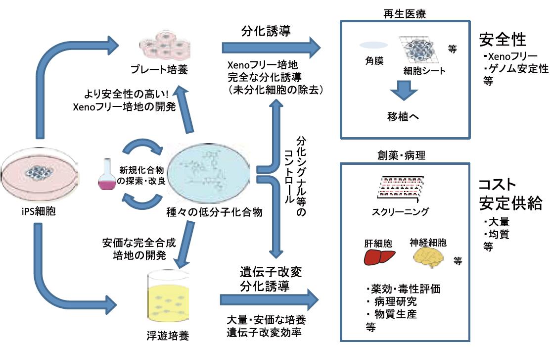 iPS細胞の応用利用と培養条件