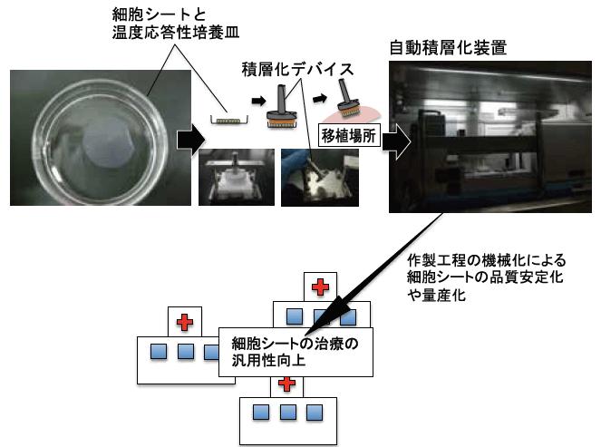 細胞シートとマニュピレーション技術の例