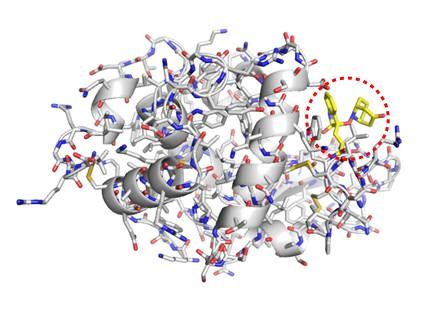 リゾチーム―keto-ABNO付加体の結晶構造。他のアミノ酸を傷めず、62番目のトリプトファンのみが修飾されている様子が分かる。