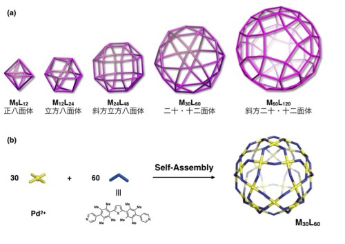 図1. (a) 存在し得るわずか5種類のMnL2n型錯体 (b) 二十・十二面体型M30L60錯体の合成スキーム