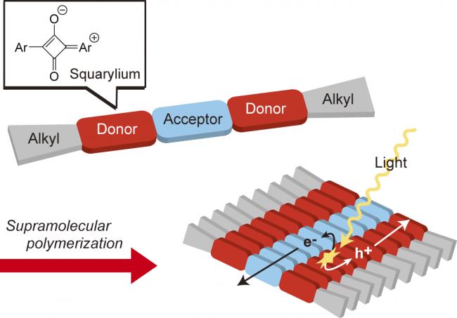 Fig. 2. 本研究のスクアリリウム色素とその超分子ポリマーの概念図.