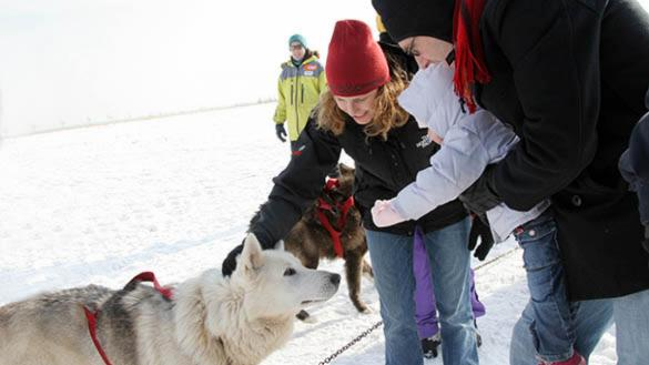 A family pets a Siberian Husky, in the snow, at Polar Adventure Days at Northerly Island