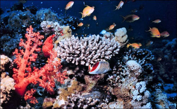Ocean Acidification Threatens Food Security, Report ...