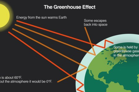 Greenhouse gases effect diagram 4k pictures 4k pictures full hq bbc gcse bitesize greenhouse gases greenhouse effect greenhouse effect greenhouse effect diagram worksheet the best worksheets image greenhouse effect ccuart Gallery