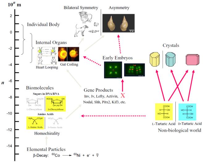 图 1 Chiromorphology (图片来自于黑田研)