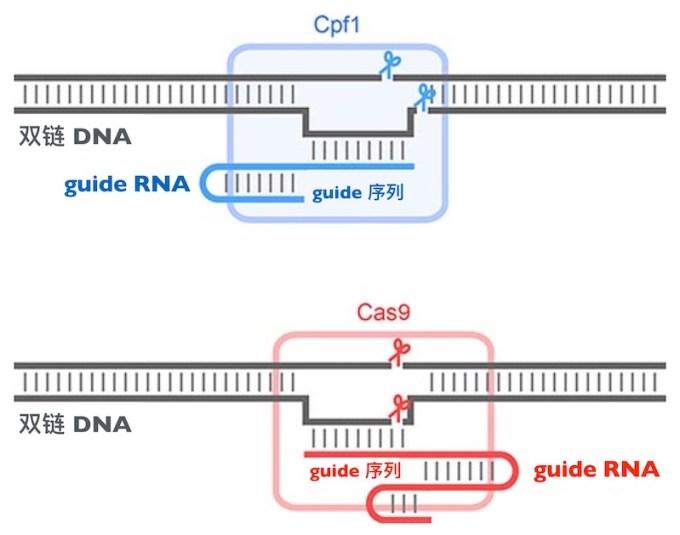 crispr-cpf1