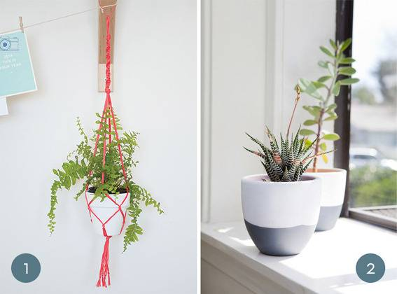 Two types of succulent planters.