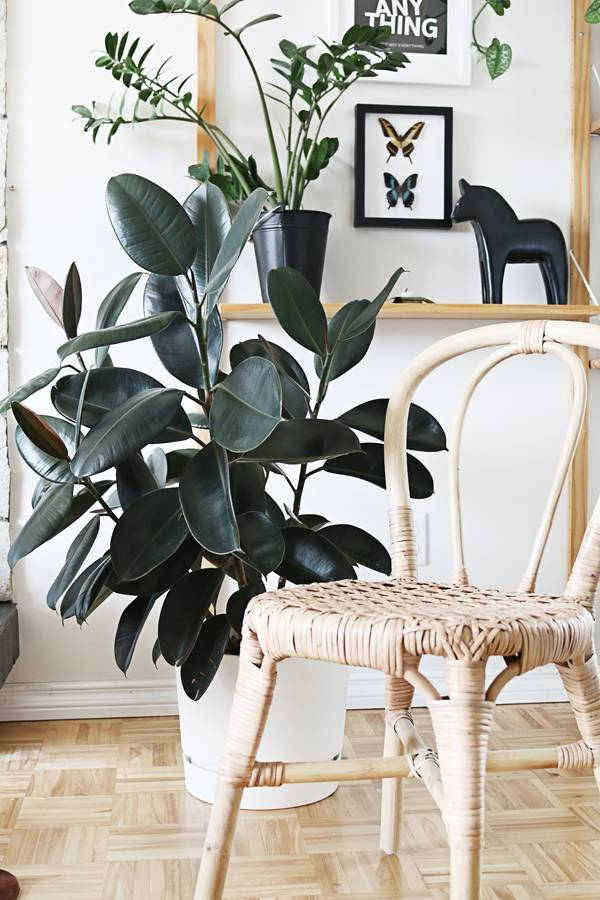 Best Low Light Houseplants