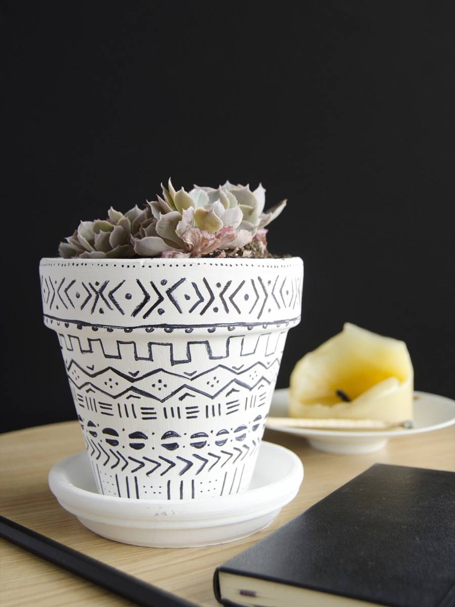 How to propagate your succulent plants