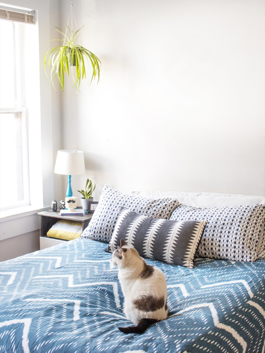 Cleaning Your Mattress: A step by step guide (with video!)