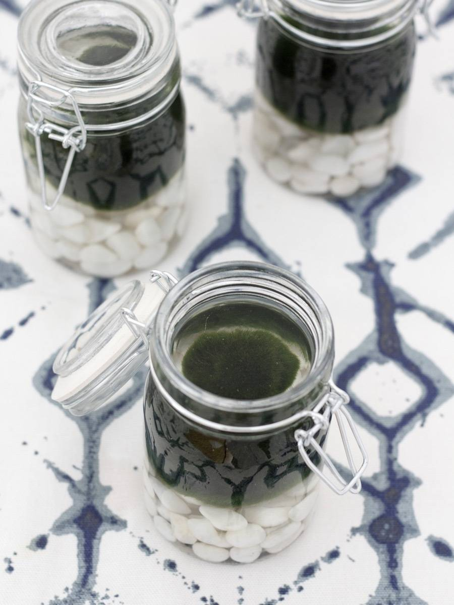 Are aquatic plants the newest trend in house plants? Marimo Moss Balls 101