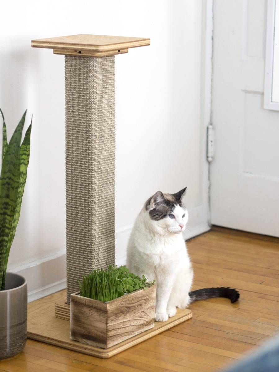 Cat garden + scratching post = main kitty hangout spot