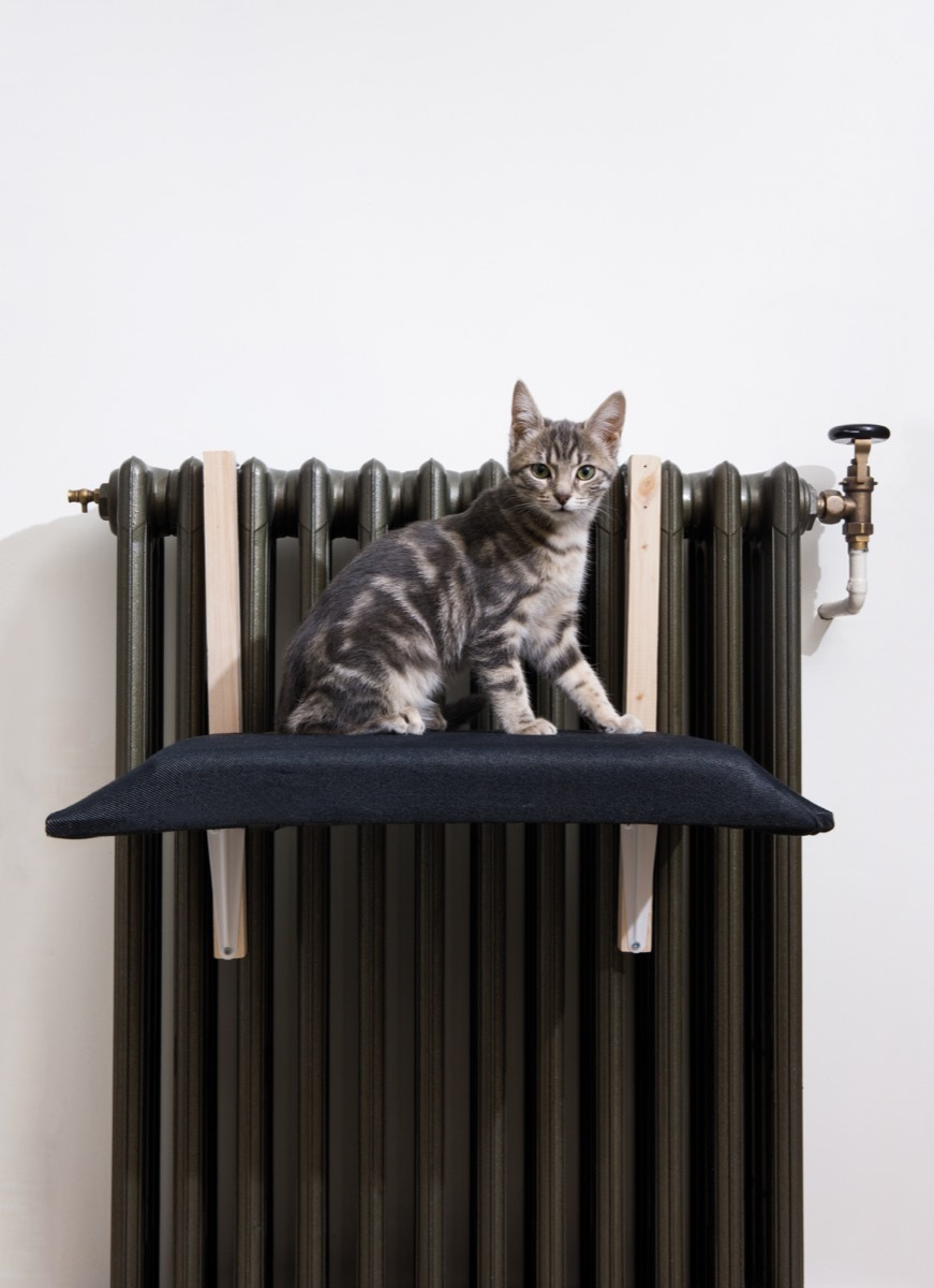 "From the new book, ""DIY Projects for Cats & Dogs."" A tutorial on how to make a radiator cat bed."