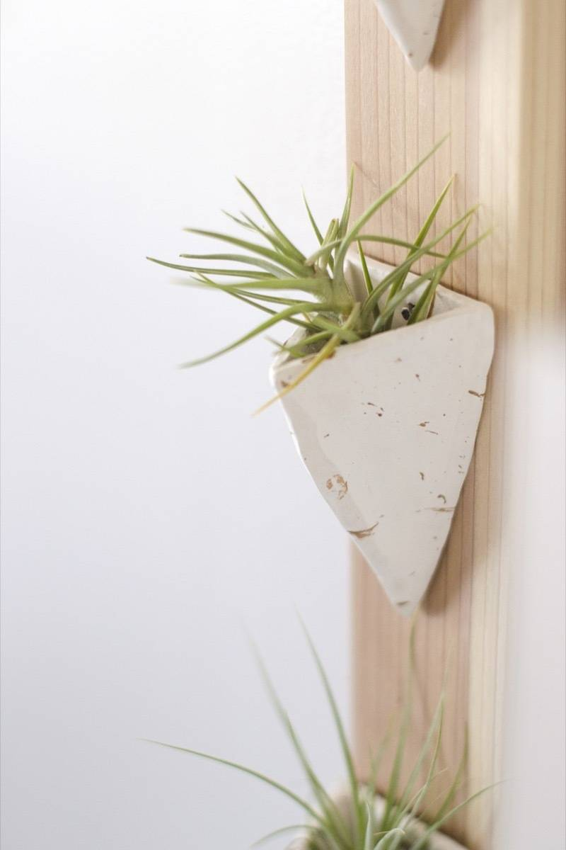 How to make a wall-mounted air plant holder