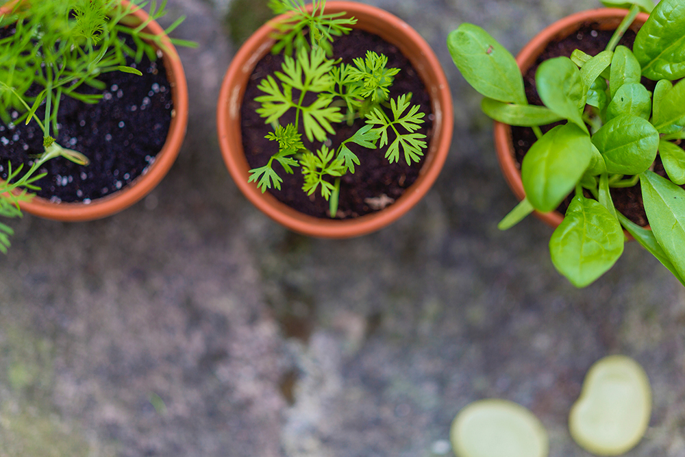 Tips for how to keep your garden watered while you're on summer vacation