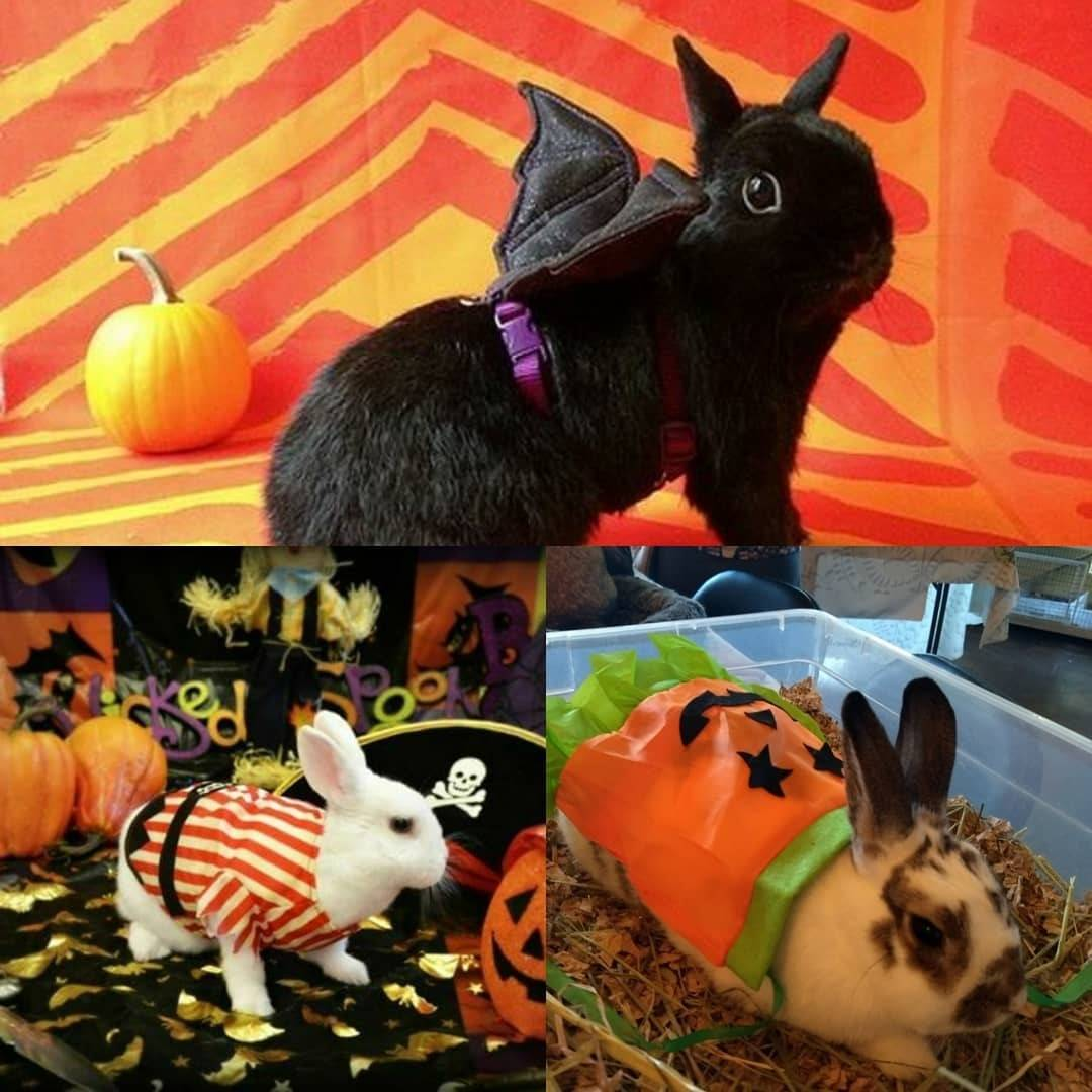 Rabbit Halloween costumes