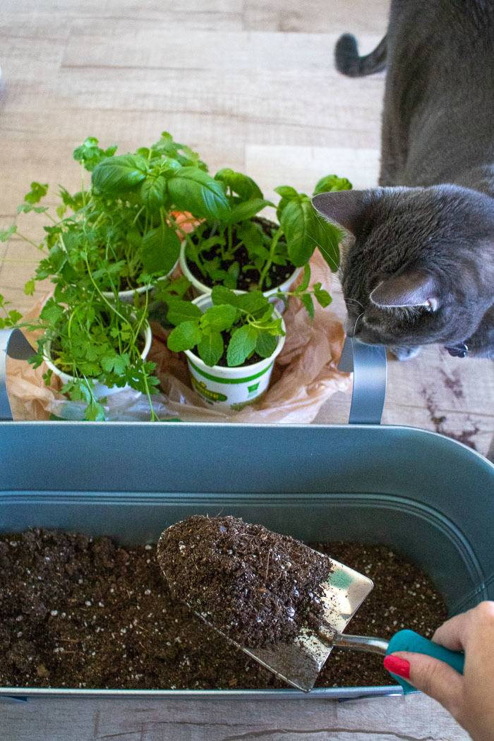 Spread a thin layer of soil