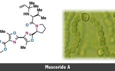 Muscoride A