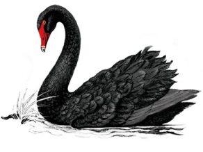 black-swan2