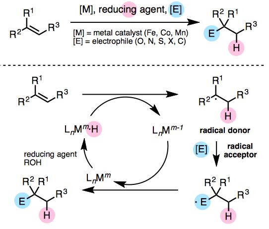 Figure 1. Olefin hydrofunctionalization by metal catalysts (Fe, Co, Mn)
