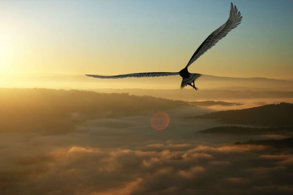que significado tiene una pluma www.aretesparahombres.com