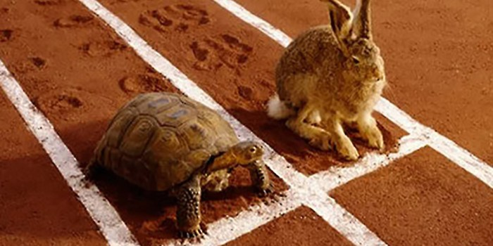 Image result for slow and steady wins the race