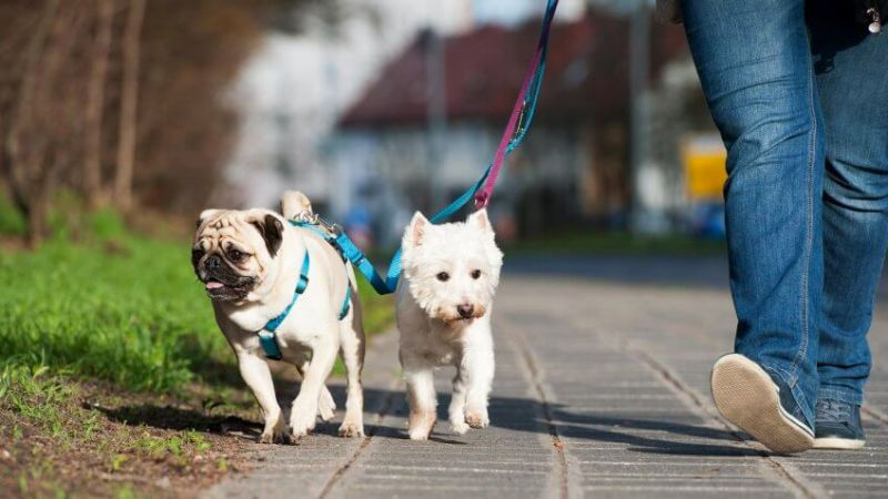 Dog walker and sitter