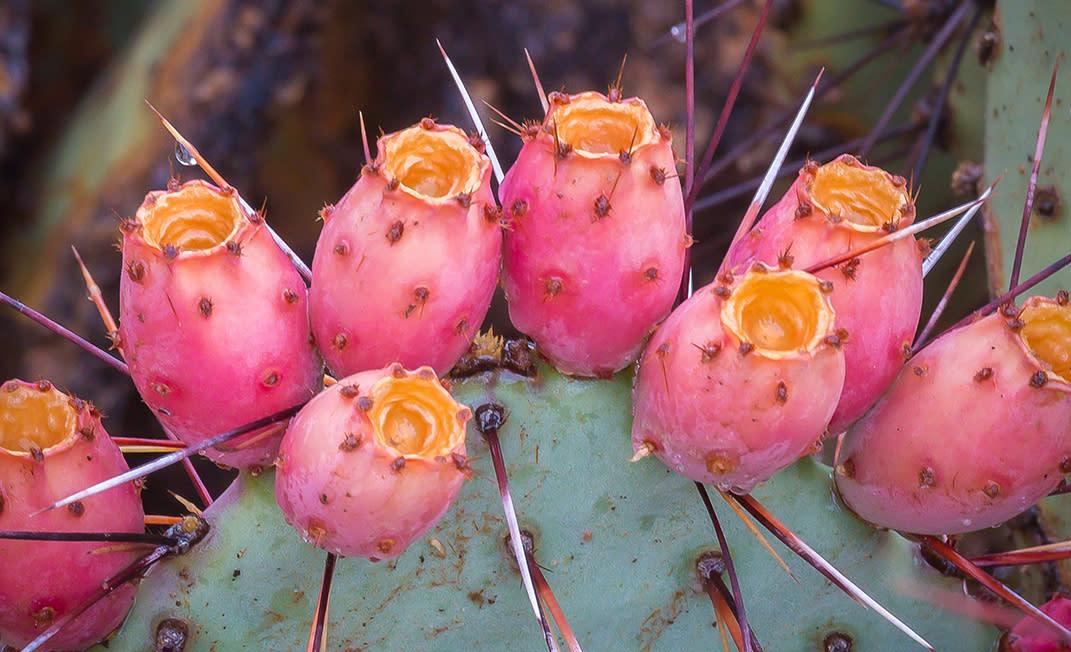 Cactus Fruit Skin You Can Eat