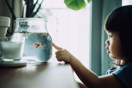 Little girl touching a fish bowl