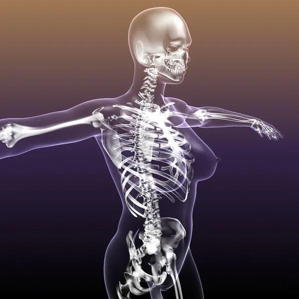 Female Skeleton inside Woman Body 3D Model – Buy Female ...